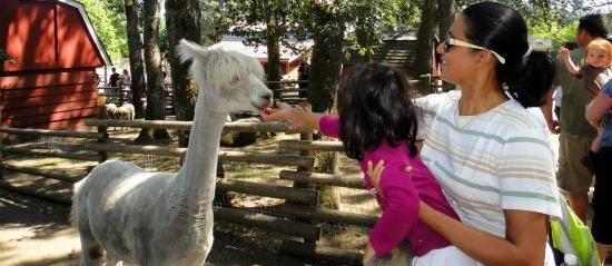 Petting Zoo Victoria BC
