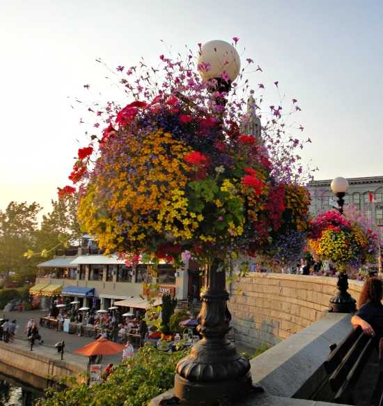 Colorful hanging baskets Victoria BC downtown