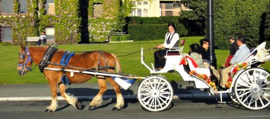 Horse Carriage Victoria BC Downtown