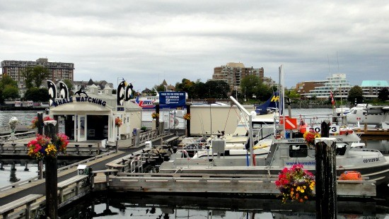 View of Victoria downtown inner harbour full of activities. Seattle to Victoria flight take only 45 minutes to get here.